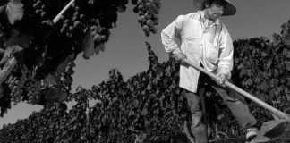 Trabajadores del vino
