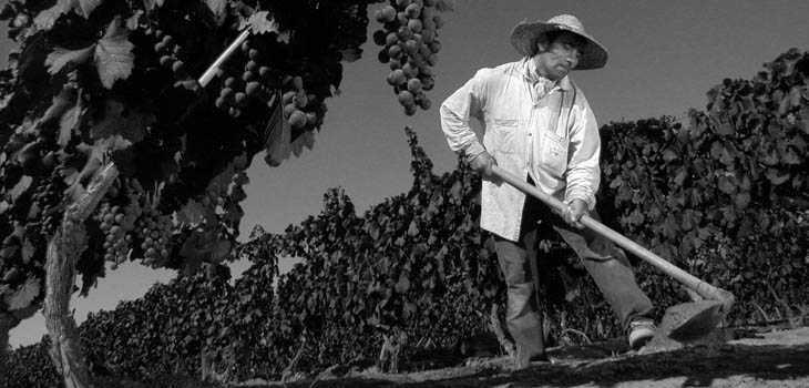 Trabajadores del vino los hacedores invisibles por vin manos - Trabajo jardinero madrid ...
