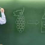 ¿Cuáles son las 5 catas necesarias para aprender de vinos?