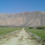 Presente y futuro del vino salteño