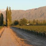 Hoja de ruta clave para visitar bodegas en Mendoza
