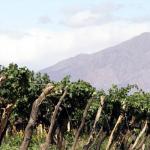 ¿Qué bodegas vale la pena visitar en San Rafael?