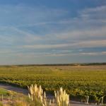 Ruta del vino en Neuquén: una moderna parada en el camino del vino