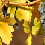 Hoja de ruta para beber un buen Cabernet Sauvignon