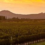 San Rafael reloaded: qué vinos definen la nueva identidad de la región