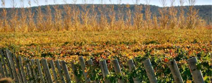 se expande frontera vinos argentino