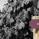 Malbec: la guía definitiva sobre el clásico vino argentino
