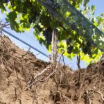 ¿ Cónocés Paraje Altamira? llega su primera feria de vinos