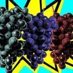 Tres uvas tintas le pondrían color al futuro vino argentino