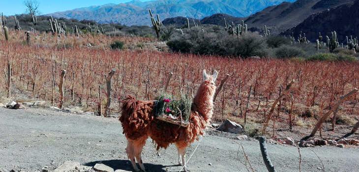 viñedo Quebrada de Humahuaca