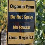 Vinos biodinámicos & orgánicos: el movimiento verde crece entre tintos y blancos