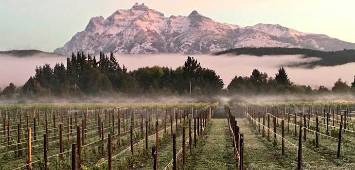 Pinot Noir de la Patagonia
