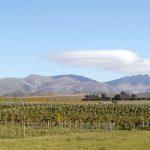 Llega la 3era Jornada de Vinos de la Provincia de Buenos Aires