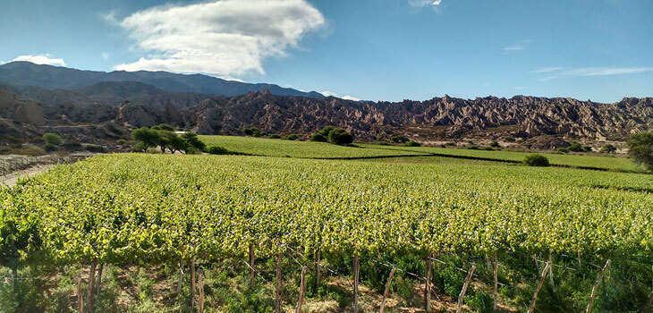 Valle Calchaquí vinos