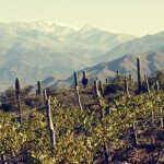Vinos de altura: ¿cómo un terroir extremo produce vinos distintos y por qué?
