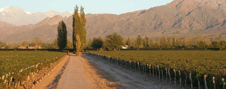visitar bodegas en Mendoza