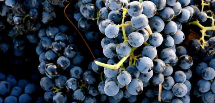 nombre de las uvas