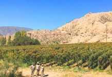 vinos de Jujuy