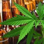 Así viven la cerveza y la marihuana su historia de amor apasionado