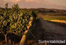 Sustentabilidad de viñedos