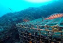 crianza de vinos submarina