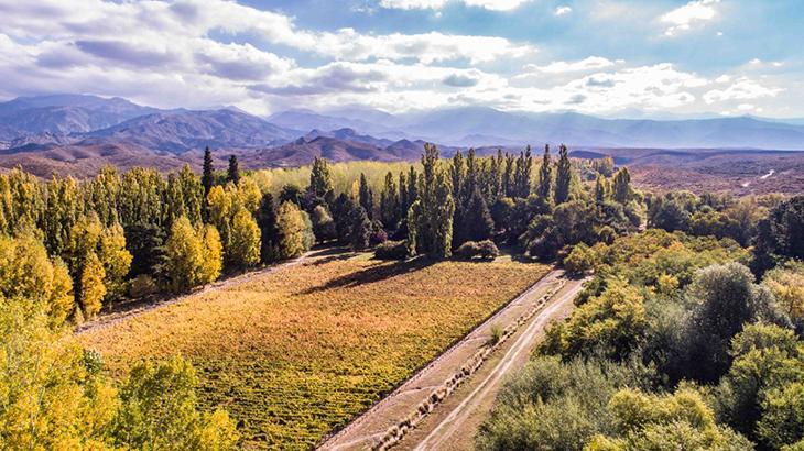 Bodega Salentein & IG San Pablo, la fórmula de los vinos elegantes 2