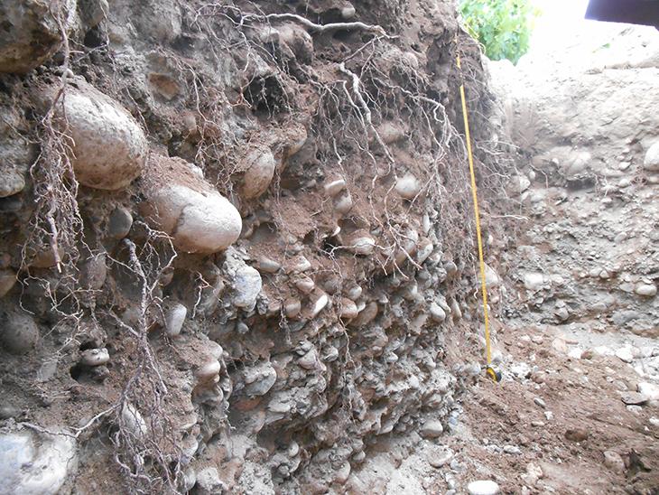 Suelos aluviones con gran contenido de piedras con carbonatos de calcio y biodiversidad