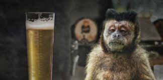 cerveza de alberto