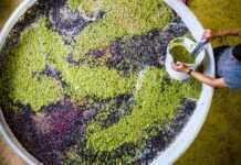 Qué es la co-fermentación