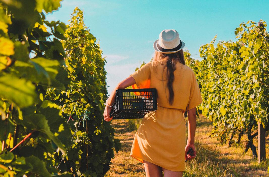Club de Mujeres Profesionales del Vino