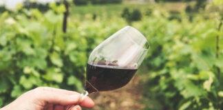 variedades de uvas italianas