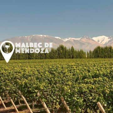 Mejores Malbec de Mendoza