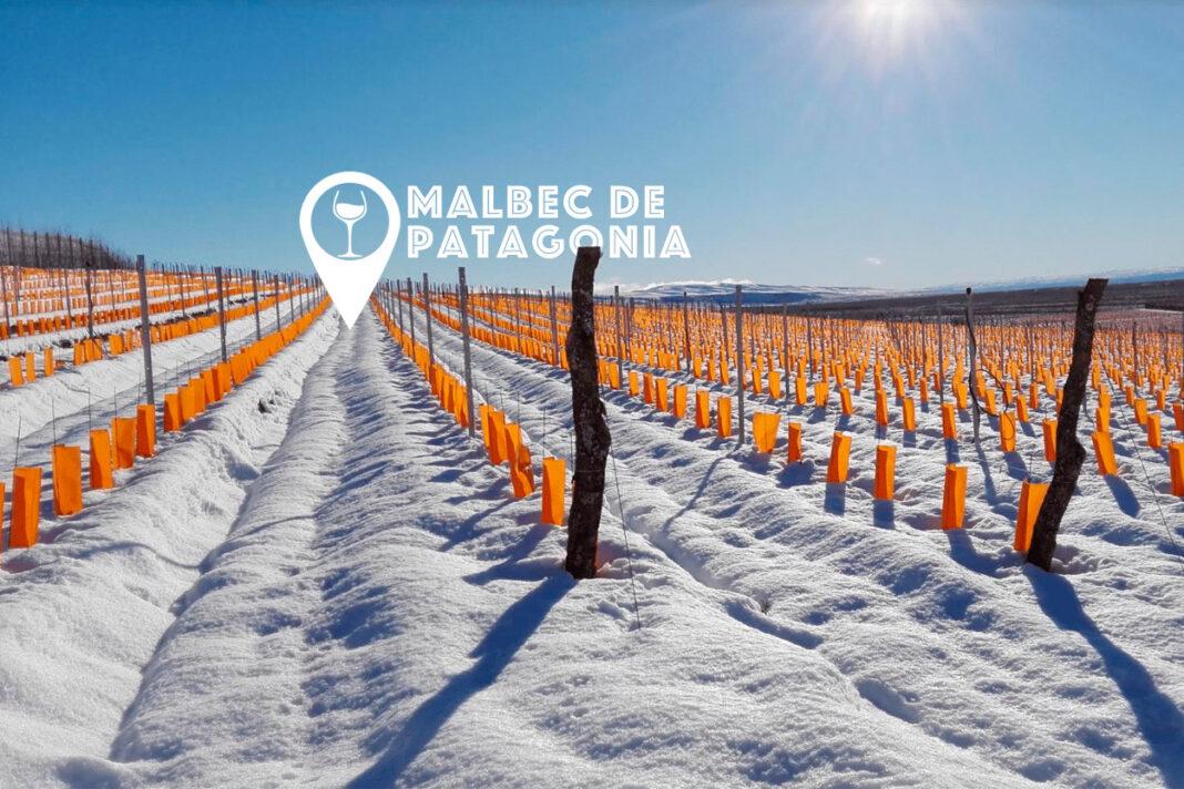 Mejores Malbec de la Patagonia