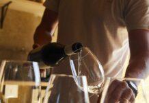 conceptos para entender el vino