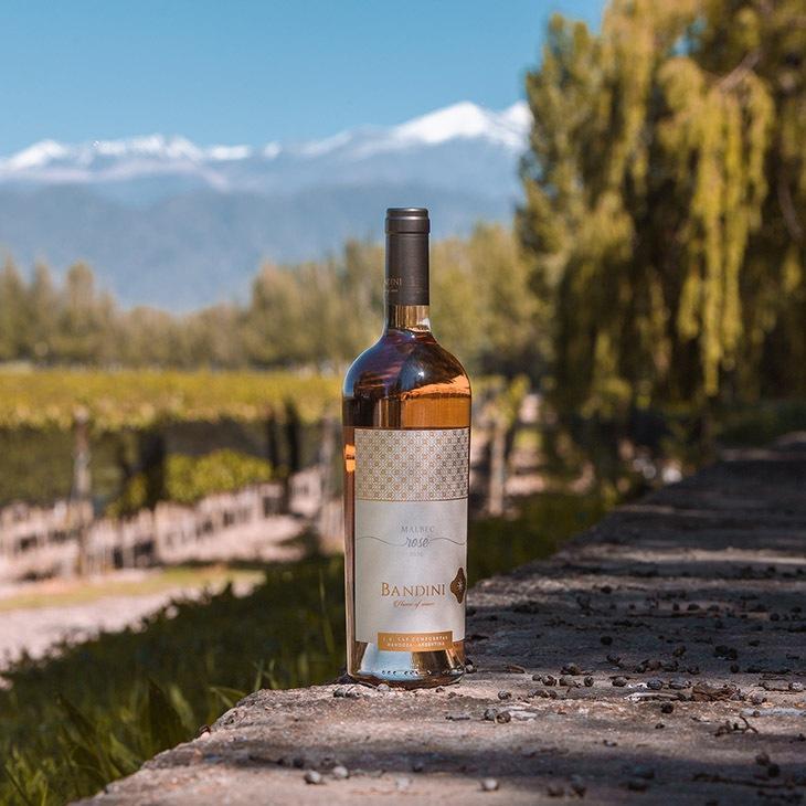 nuevos vinos de Finca Bandini