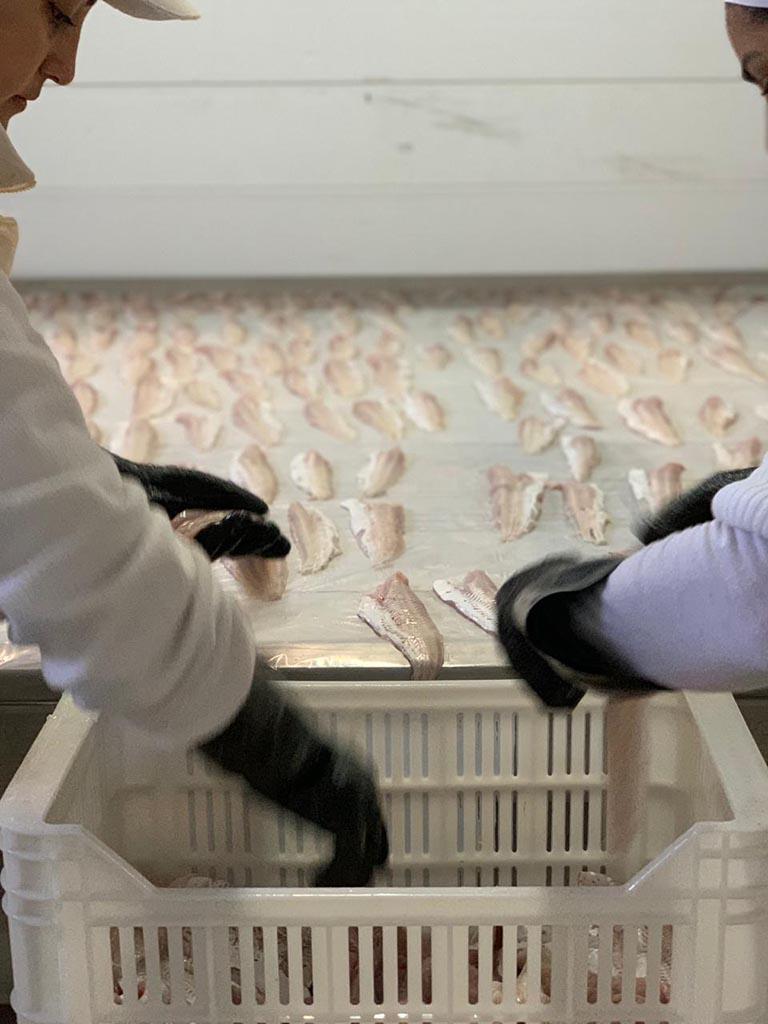 dónde comprar pescados congelados